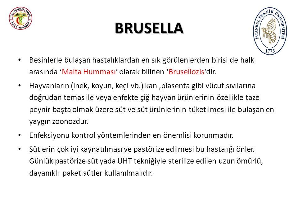 BRUSELLA Besinlerle bulaşan hastalıklardan en sık görülenlerden birisi de halk arasında 'Malta Humması' olarak bilinen 'Brusellozis'dir. Hayvanların (