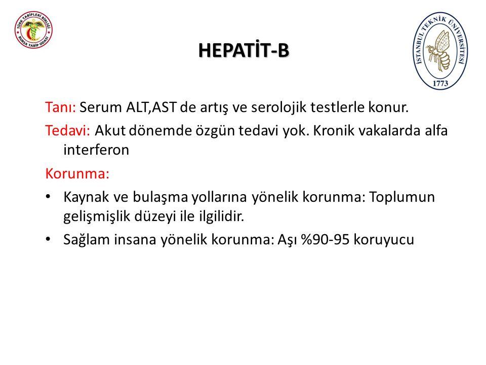 HEPATİT-B Tanı: Serum ALT,AST de artış ve serolojik testlerle konur. Tedavi: Akut dönemde özgün tedavi yok. Kronik vakalarda alfa interferon Korunma: