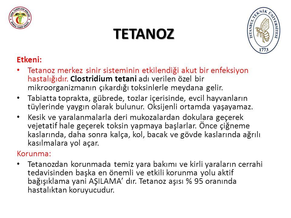 TETANOZ Etkeni: Tetanoz merkez sinir sisteminin etkilendiği akut bir enfeksiyon hastalığıdır. Clostridium tetani adı verilen özel bir mikroorganizmanı