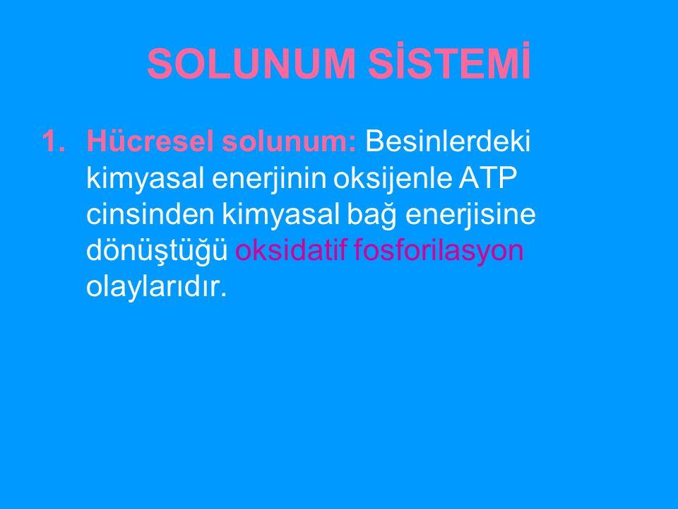 SOLUNUM SİSTEMİ 1.Hücresel solunum: Besinlerdeki kimyasal enerjinin oksijenle ATP cinsinden kimyasal bağ enerjisine dönüştüğü oksidatif fosforilasyon