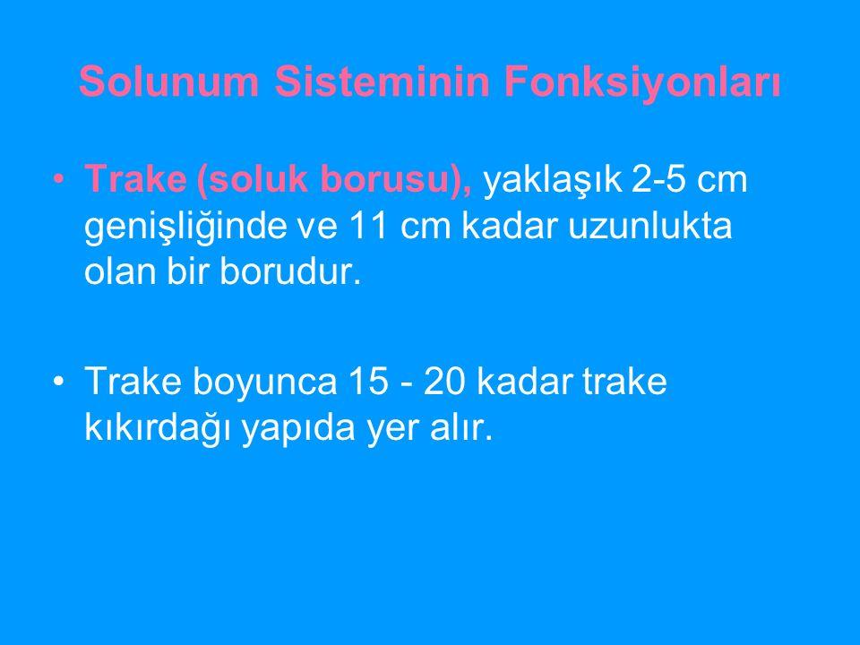 Solunum Sisteminin Fonksiyonları Trake (soluk borusu), yaklaşık 2-5 cm genişliğinde ve 11 cm kadar uzunlukta olan bir borudur. Trake boyunca 15 - 20 k