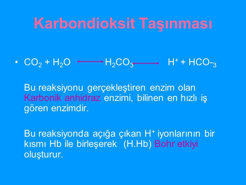 Karbondioksit Taşınması CO 2 + H 2 O H 2 CO 3 H + + HCO- 3 Bu reaksiyonu gerçekleştiren enzim olan Karbonik anhidraz enzimi, bilinen en hızlı iş gören