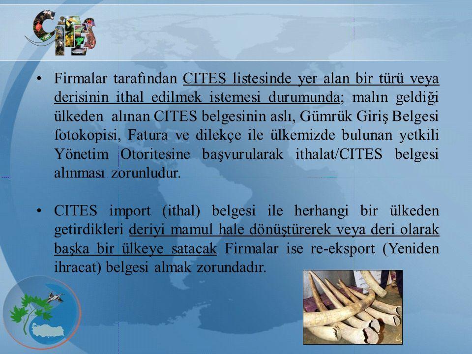Firmalar tarafından CITES listesinde yer alan bir türü veya derisinin ithal edilmek istemesi durumunda; malın geldiği ülkeden alınan CITES belgesinin