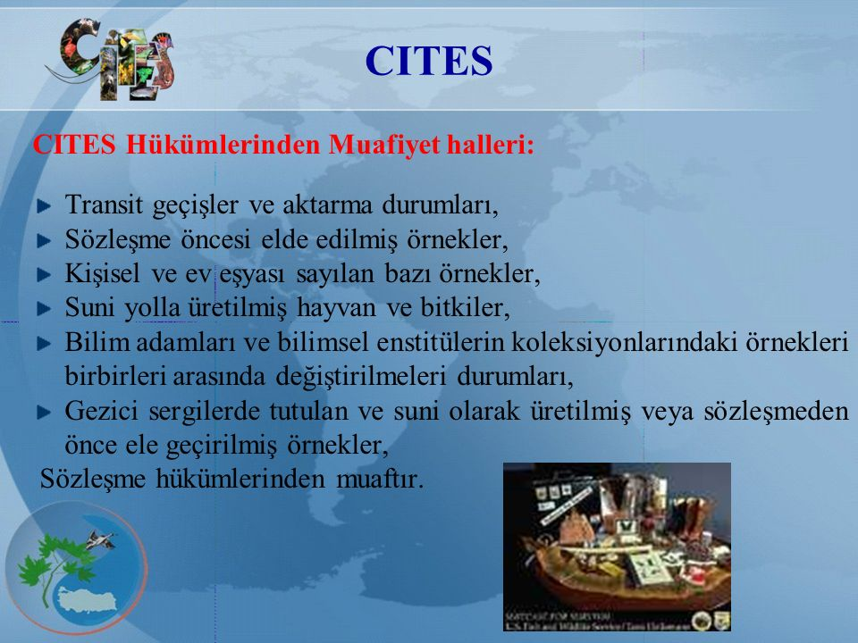 CITES CITES Hükümlerinden Muafiyet halleri: Transit geçişler ve aktarma durumları, Sözleşme öncesi elde edilmiş örnekler, Kişisel ve ev eşyası sayılan