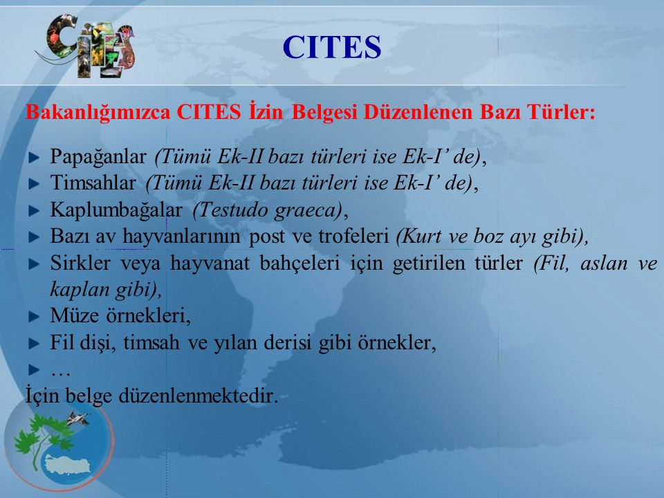 CITES Bakanlığımızca CITES İzin Belgesi Düzenlenen Bazı Türler: Papağanlar (Tümü Ek-II bazı türleri ise Ek-I' de), Timsahlar (Tümü Ek-II bazı türleri
