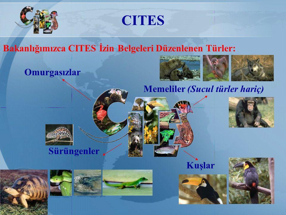 CITES Kuşlar Memeliler (Sucul türler hariç) Omurgasızlar Sürüngenler Bakanlığımızca CITES İzin Belgeleri Düzenlenen Türler: