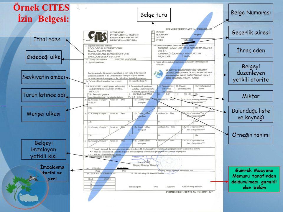 CITES Örnek CITES İzin Belgesi: Belge Numarası Geçerlik süresi İhraç eden Belgeyi düzenleyen yetkili otorite Belge türü İthal eden Gideceği ülke Türün