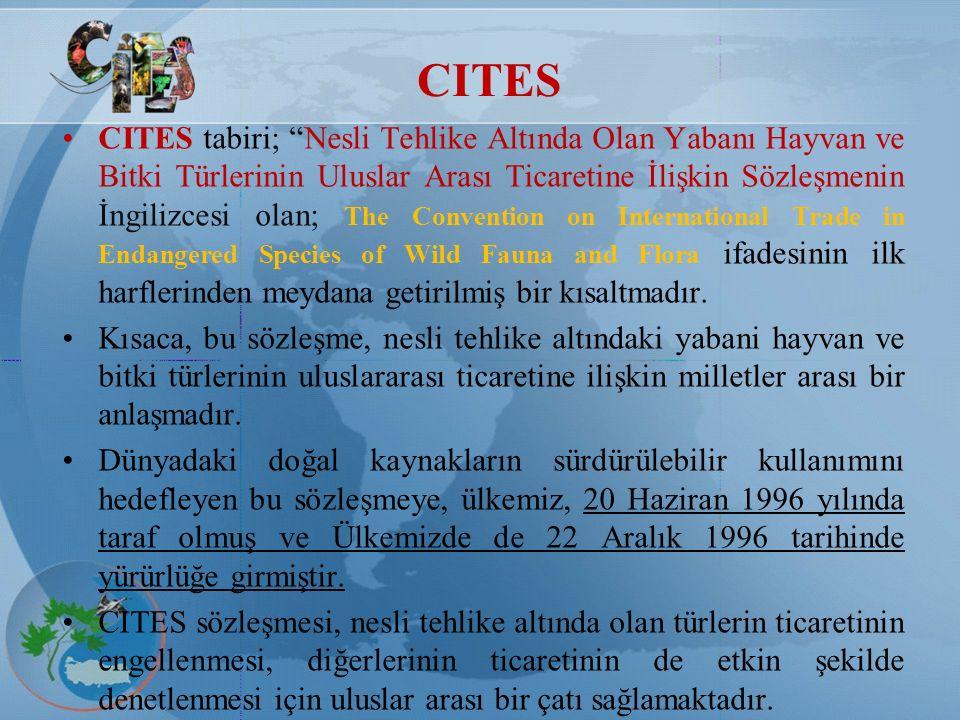 """CITES CITES tabiri; """"Nesli Tehlike Altında Olan Yabanı Hayvan ve Bitki Türlerinin Uluslar Arası Ticaretine İlişkin Sözleşmenin İngilizcesi olan; The C"""