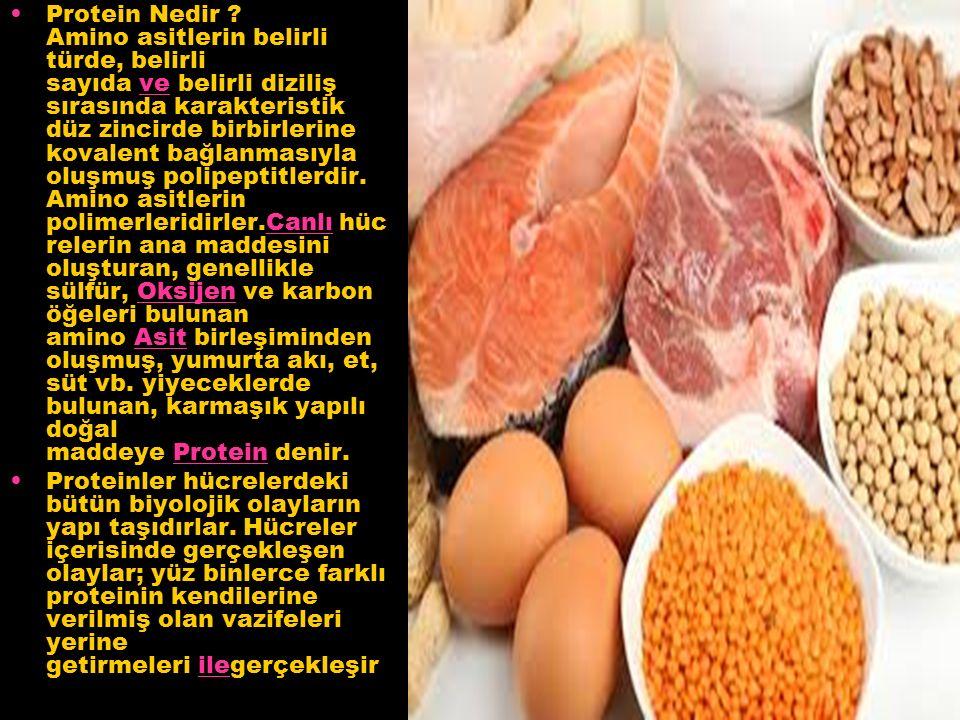 Protein Nedir .