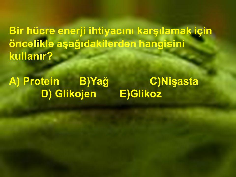 Bir hücre enerji ihtiyacını karşılamak için öncelikle aşağıdakilerden hangisini kullanır? A) Protein B)Yağ C)Nişasta D) Glikojen E)Glikoz