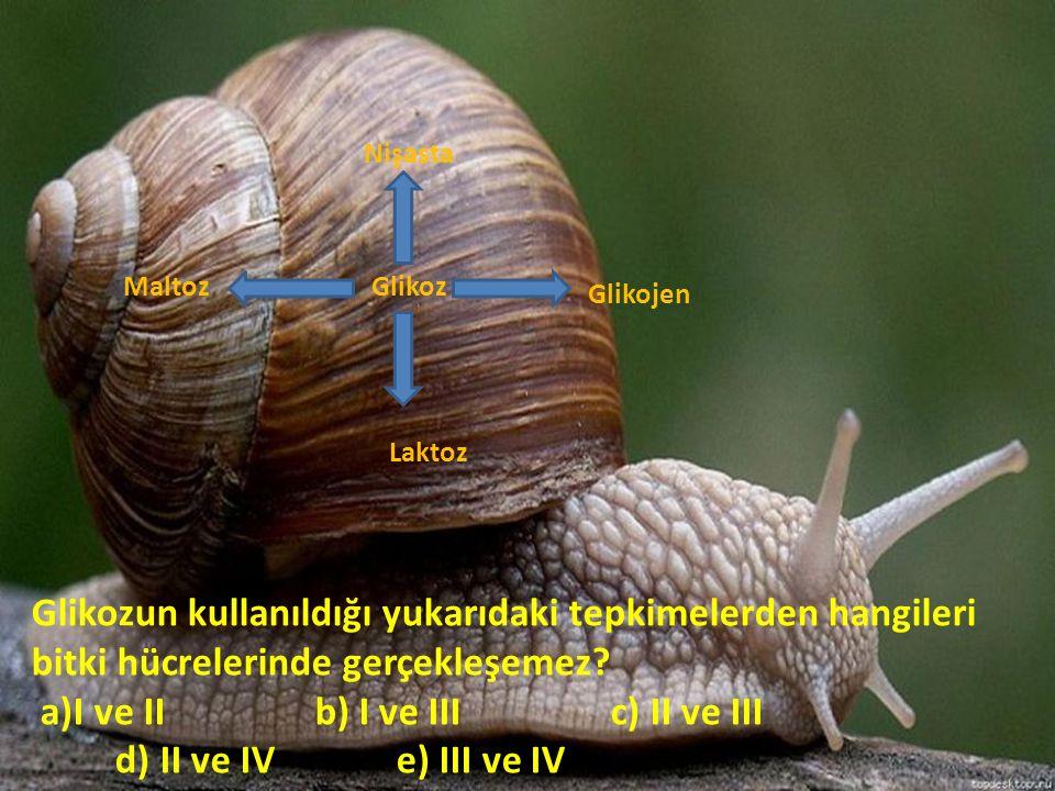 Glikoz Nişasta Glikojen Laktoz Maltoz Glikozun kullanıldığı yukarıdaki tepkimelerden hangileri bitki hücrelerinde gerçekleşemez? a)I ve II b) I ve III