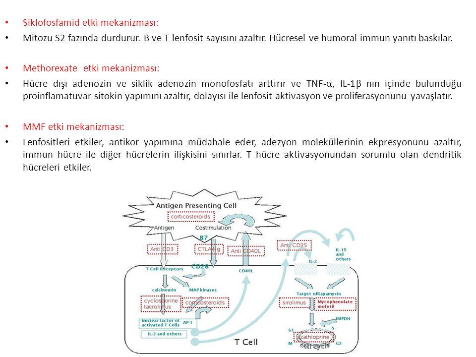 Siklofosfamid etki mekanizması: Mitozu S2 fazında durdurur.