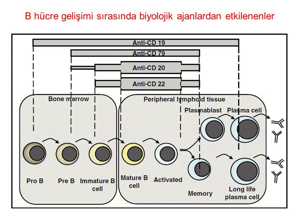 B hücre gelişimi sırasında biyolojik ajanlardan etkilenenler