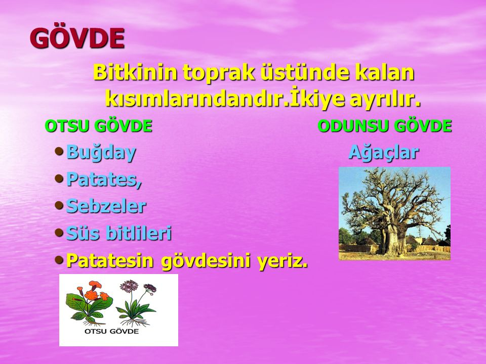KÖK ÇEŞİTLERİ KAZIK KÖK KAZIK KÖK  Ağaç kökleri  Domates SAÇAK KÖK SAÇAK KÖK  Soğan  Mısır YUMRU KÖK YUMRU KÖK  Havuç  Turp,