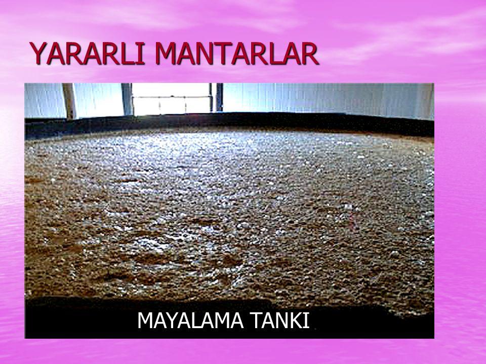 YARARLI MANTARLAR Besin olarak kullanılır Besin olarak kullanılır Çeşitli peynir yapımında kullanılır. Çeşitli peynir yapımında kullanılır. Hamurun ka