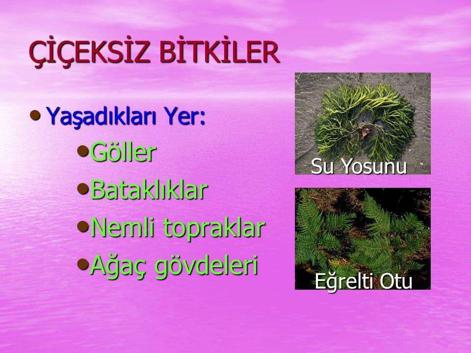  B itkileri SınıflandıralımBİTKİLER Çiçeksiz Bitkiler Çiçekli Bitkiler