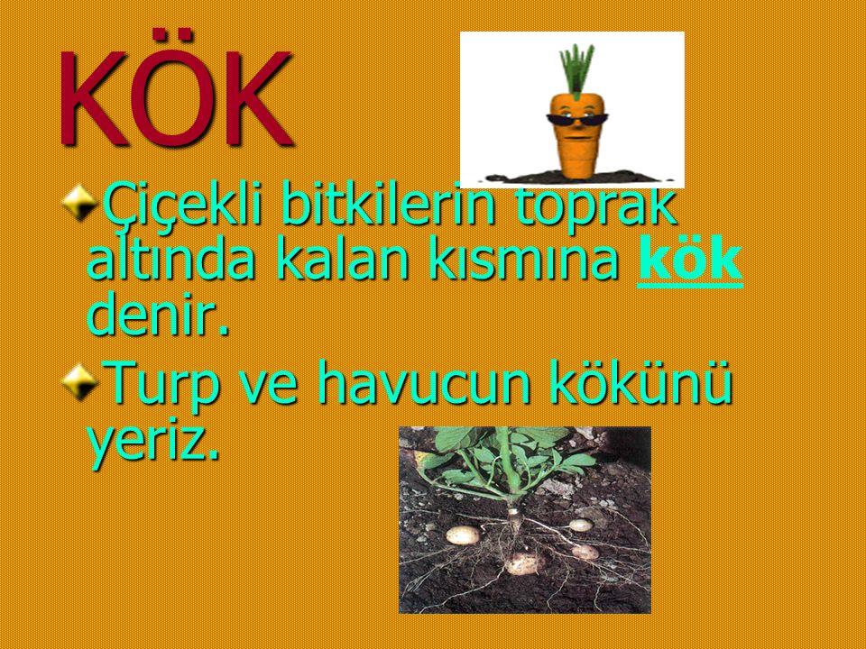 KÖK Çiçekli bitkilerin toprak altında kalan kısmına denir.