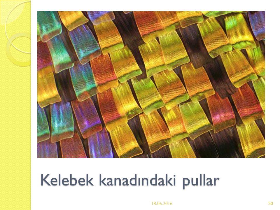 50 Kelebek kanadındaki pullar 18.06.201650