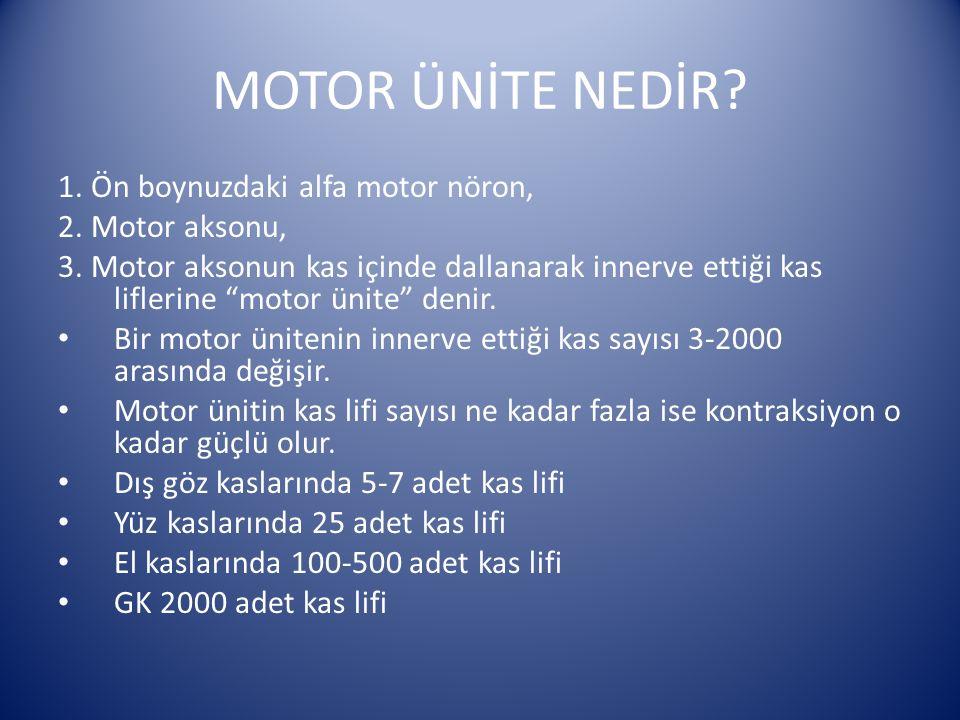 """MOTOR ÜNİTE NEDİR? 1. Ön boynuzdaki alfa motor nöron, 2. Motor aksonu, 3. Motor aksonun kas içinde dallanarak innerve ettiği kas liflerine """"motor ünit"""