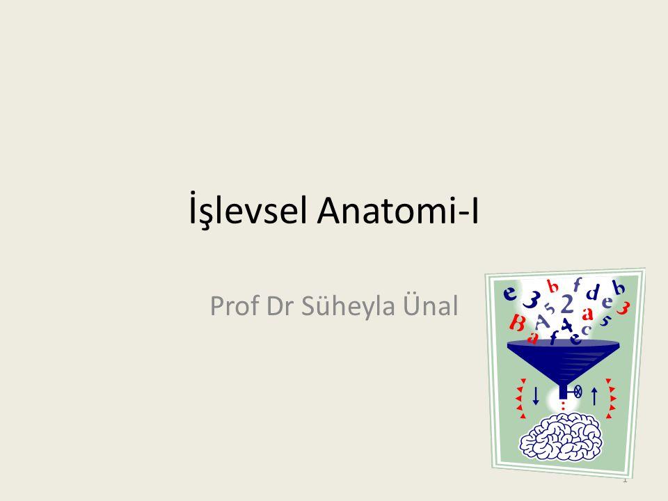 İşlevsel Anatomi-I Prof Dr Süheyla Ünal 1