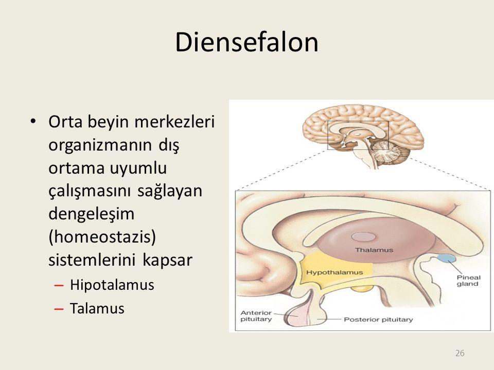 26 Diensefalon Orta beyin merkezleri organizmanın dış ortama uyumlu çalışmasını sağlayan dengeleşim (homeostazis) sistemlerini kapsar – Hipotalamus – Talamus