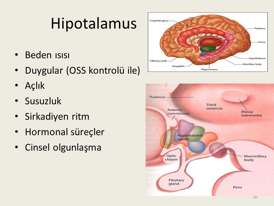 30 Hipotalamus Beden ısısı Duygular (OSS kontrolü ile) Açlık Susuzluk Sirkadiyen ritm Hormonal süreçler Cinsel olgunlaşma
