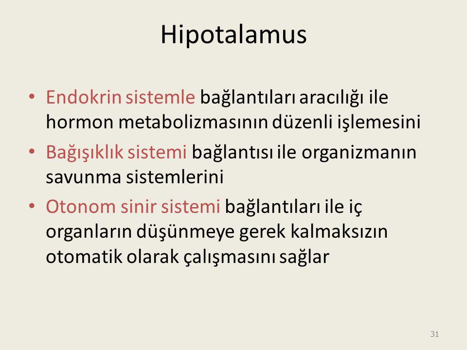 31 Hipotalamus Endokrin sistemle bağlantıları aracılığı ile hormon metabolizmasının düzenli işlemesini Bağışıklık sistemi bağlantısı ile organizmanın savunma sistemlerini Otonom sinir sistemi bağlantıları ile iç organların düşünmeye gerek kalmaksızın otomatik olarak çalışmasını sağlar