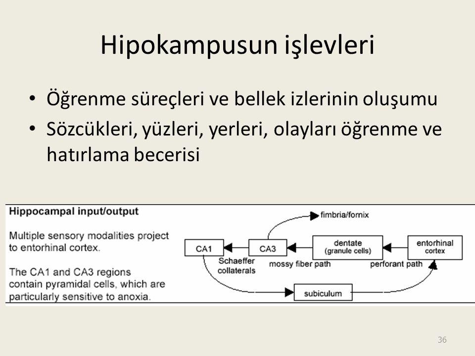 Hipokampusun işlevleri Öğrenme süreçleri ve bellek izlerinin oluşumu Sözcükleri, yüzleri, yerleri, olayları öğrenme ve hatırlama becerisi 36