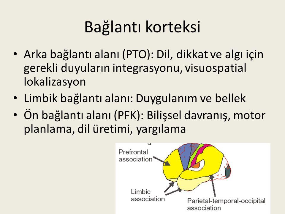 Bağlantı korteksi Arka bağlantı alanı (PTO): Dil, dikkat ve algı için gerekli duyuların integrasyonu, visuospatial lokalizasyon Limbik bağlantı alanı: Duygulanım ve bellek Ön bağlantı alanı (PFK): Bilişsel davranış, motor planlama, dil üretimi, yargılama 40