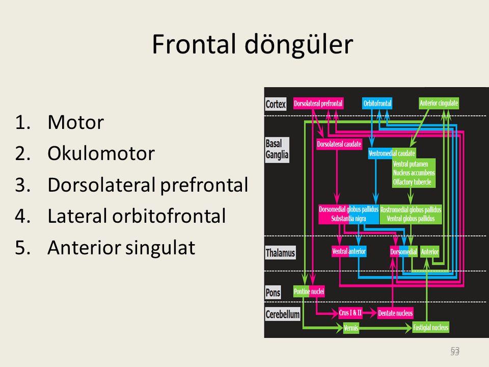 53 Frontal döngüler 1.Motor 2.Okulomotor 3.Dorsolateral prefrontal 4.Lateral orbitofrontal 5.Anterior singulat 53