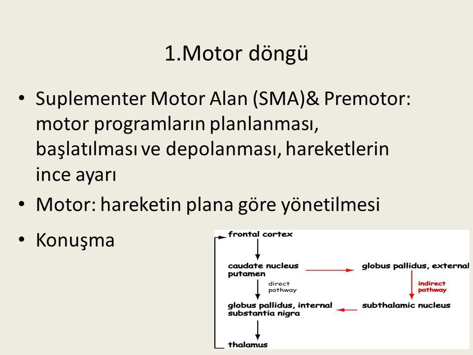 55 Suplementer Motor Alan (SMA)& Premotor: motor programların planlanması, başlatılması ve depolanması, hareketlerin ince ayarı Motor: hareketin plana göre yönetilmesi Konuşma 1.Motor döngü 55