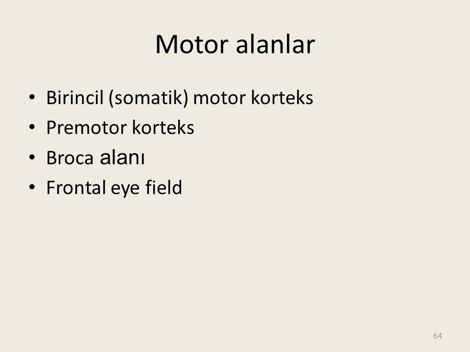Motor alanlar Birincil (somatik) motor korteks Premotor korteks Broca alanı Frontal eye field 64