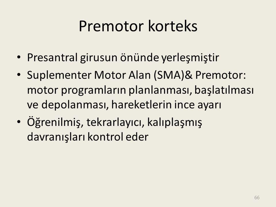 Premotor korteks Presantral girusun önünde yerleşmiştir Suplementer Motor Alan (SMA)& Premotor: motor programların planlanması, başlatılması ve depolanması, hareketlerin ince ayarı Öğrenilmiş, tekrarlayıcı, kalıplaşmış davranışları kontrol eder 66
