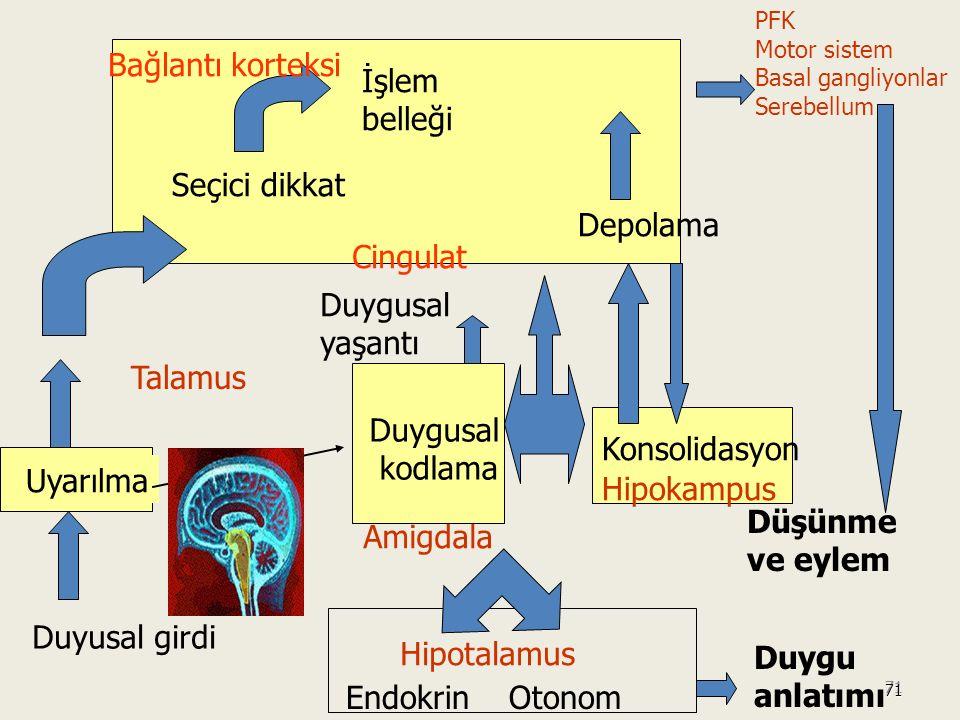 71 71 Düşünme ve eylem PFK Motor sistem Basal gangliyonlar Serebellum Duyusal girdi Uyarılma Seçici dikkat İşlem belleği Bağlantı korteksi Depolama Duygusal kodlama Cingulat Duygusal yaşantı Amigdala Duygu anlatımı Endokrin Otonom Hipotalamus Hipokampus Konsolidasyon Talamus