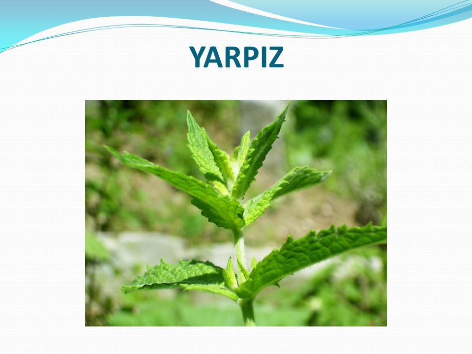 YARPIZ