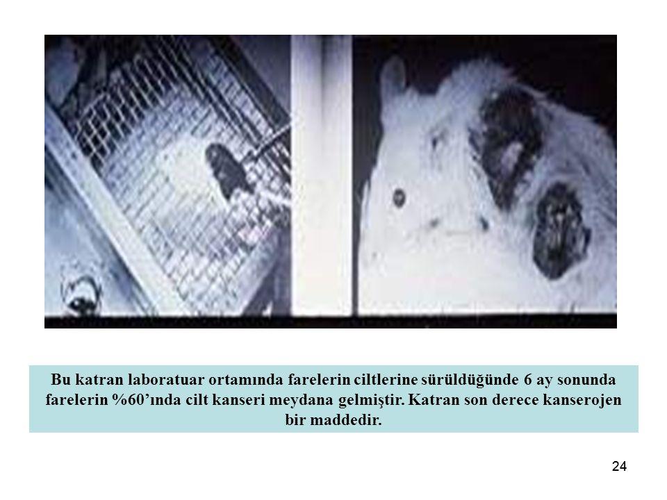 24 Bu katran laboratuar ortamında farelerin ciltlerine sürüldüğünde 6 ay sonunda farelerin %60'ında cilt kanseri meydana gelmiştir.