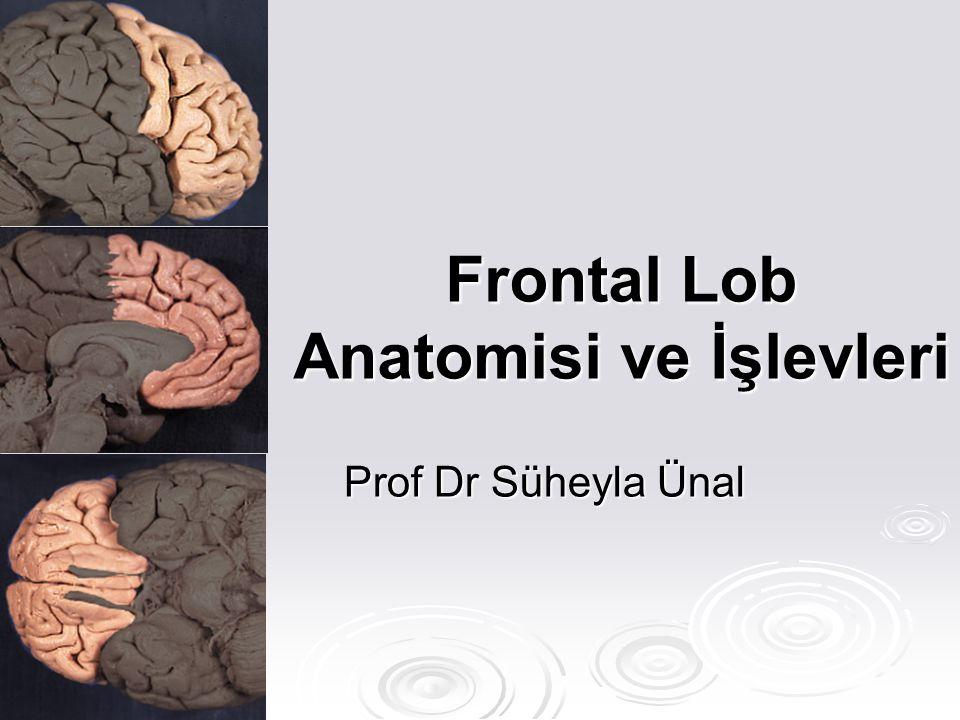  Motor Korteks Primer Primer Premotor Premotor Suplementer Suplementer Frontal göz alanı Frontal göz alanı Broca konuşma merkezi Broca konuşma merkezi  Prefrontal korteks Frontal Lob Anatomisi