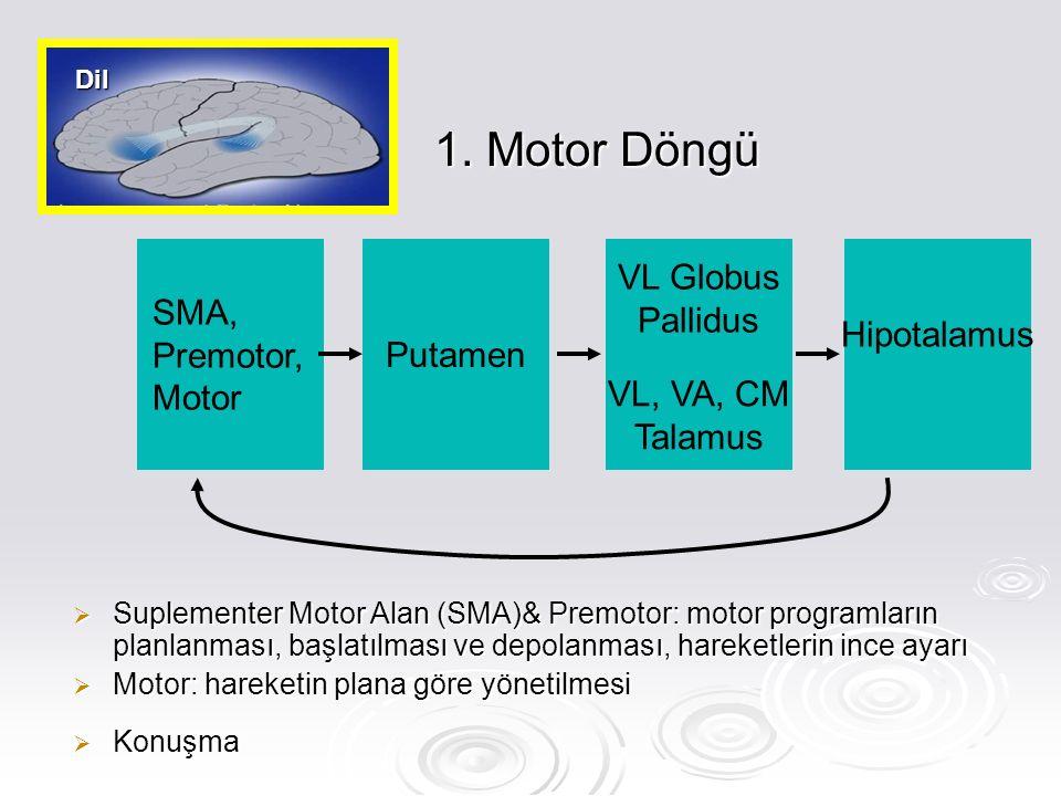 1. Motor Döngü  Suplementer Motor Alan (SMA)& Premotor: motor programların planlanması, başlatılması ve depolanması, hareketlerin ince ayarı  Motor:
