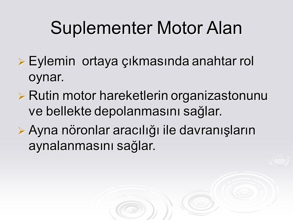 Suplementer Motor Alan  Eylemin ortaya çıkmasında anahtar rol oynar.