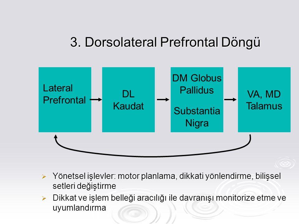 3. Dorsolateral Prefrontal Döngü  Yönetsel işlevler: motor planlama, dikkati yönlendirme, bilişsel setleri değiştirme  Dikkat ve işlem belleği aracı