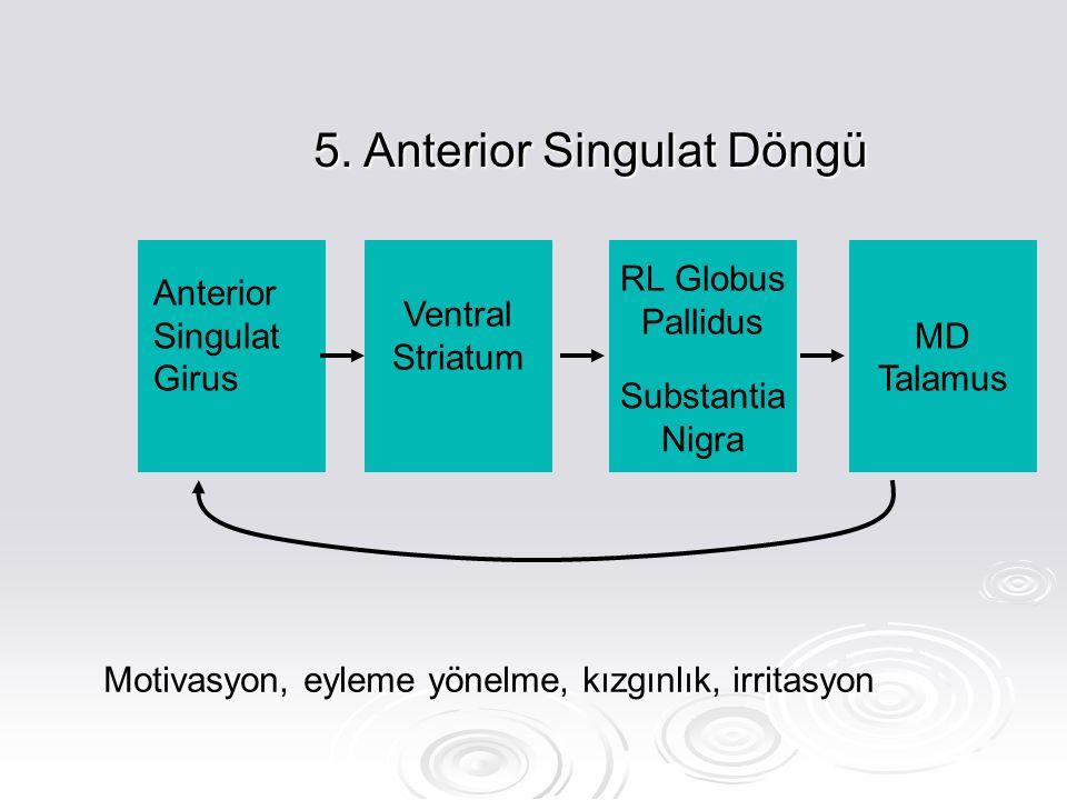 5. Anterior Singulat Döngü Anterior Singulat Girus Ventral Striatum RL Globus Pallidus Substantia Nigra MD Talamus Motivasyon, eyleme yönelme, kızgınl
