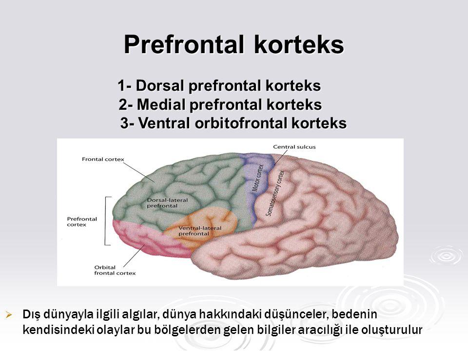 Prefrontal korteks  Dış dünyayla ilgili algılar, dünya hakkındaki düşünceler, bedenin kendisindeki olaylar bu bölgelerden gelen bilgiler aracılığı ile oluşturulur 1- Dorsal prefrontal korteks 1- Dorsal prefrontal korteks 2- Medial prefrontal korteks 2- Medial prefrontal korteks 3- Ventral orbitofrontal korteks 3- Ventral orbitofrontal korteks