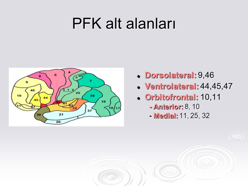 PFK alt alanları Dorsolateral: Dorsolateral: 9,46 Ventrolateral: Ventrolateral: 44,45,47 Orbitofrontal: Orbitofrontal: 10,11 - Anterior: - Anterior: 8, 10 Medial: - Medial: 11, 25, 32