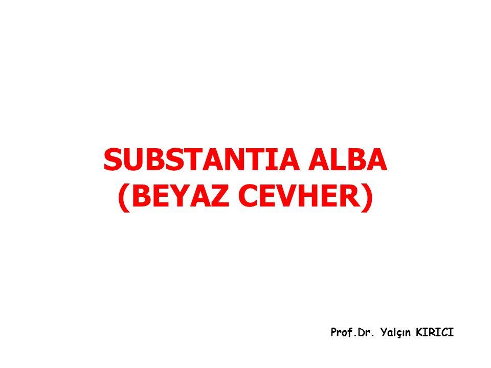 SUBSTANTIA ALBA (BEYAZ CEVHER) Prof.Dr. Yalçın KIRICI