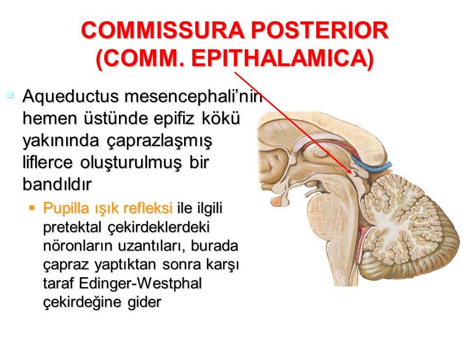 COMMISSURA POSTERIOR (COMM. EPITHALAMICA)  Aqueductus mesencephali'nin hemen üstünde epifiz kökü yakınında çaprazlaşmış liflerce oluşturulmuş bir ban