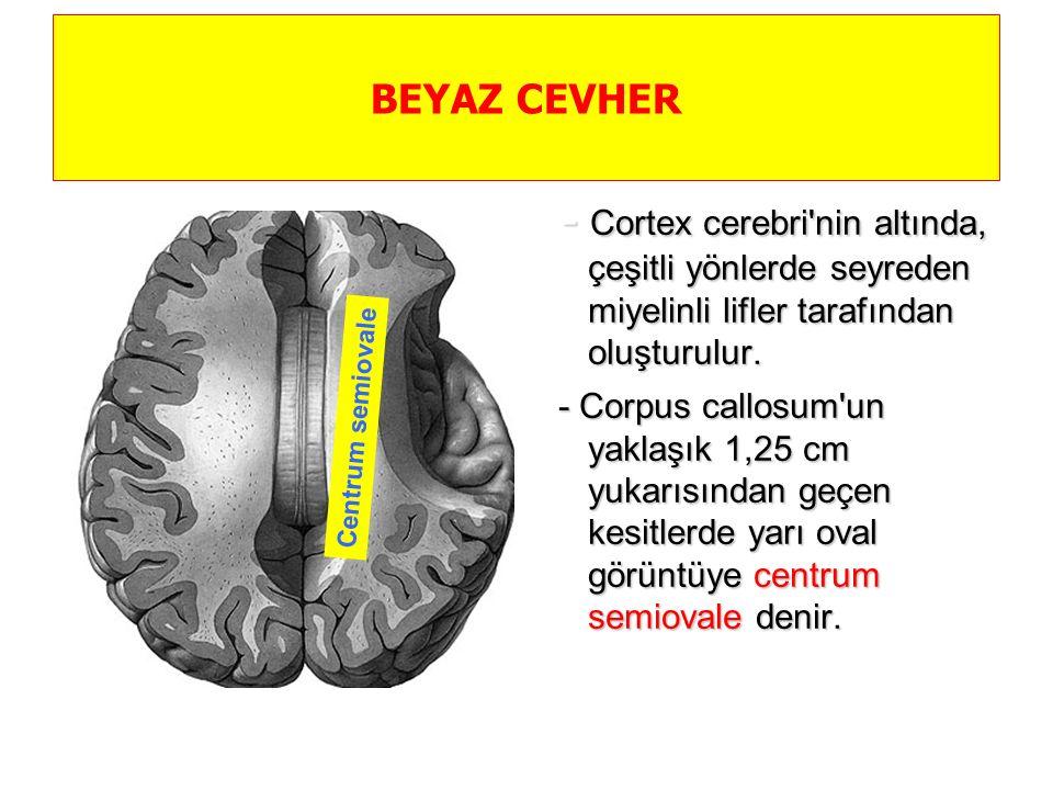 Beyaz cevheri oluşturan lifler, seyir yönlerine göre 3 grupta toplanır  I- Fibrae associationis telencephali  Aynı hemisferdeki çeşitli kortikal alanları birbirine bağlayan sagittal seyirli liflerdir  İki komşu gyrus'u yada uzak gyrus'ları bağlarlar  Komşu gyrus'ları bağlayanlara fibrae associationis breves ( U lifleri, fibrae arcuatae)  Uzak gyrus'ları bağlayanlara da fibrae associationis longae adı verilir