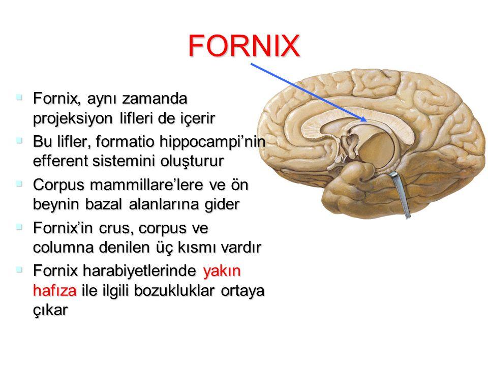 FORNIX  Fornix, aynı zamanda projeksiyon lifleri de içerir  Bu lifler, formatio hippocampi'nin efferent sistemini oluşturur  Corpus mammillare'lere ve ön beynin bazal alanlarına gider  Fornix'in crus, corpus ve columna denilen üç kısmı vardır  Fornix harabiyetlerinde yakın hafıza ile ilgili bozukluklar ortaya çıkar