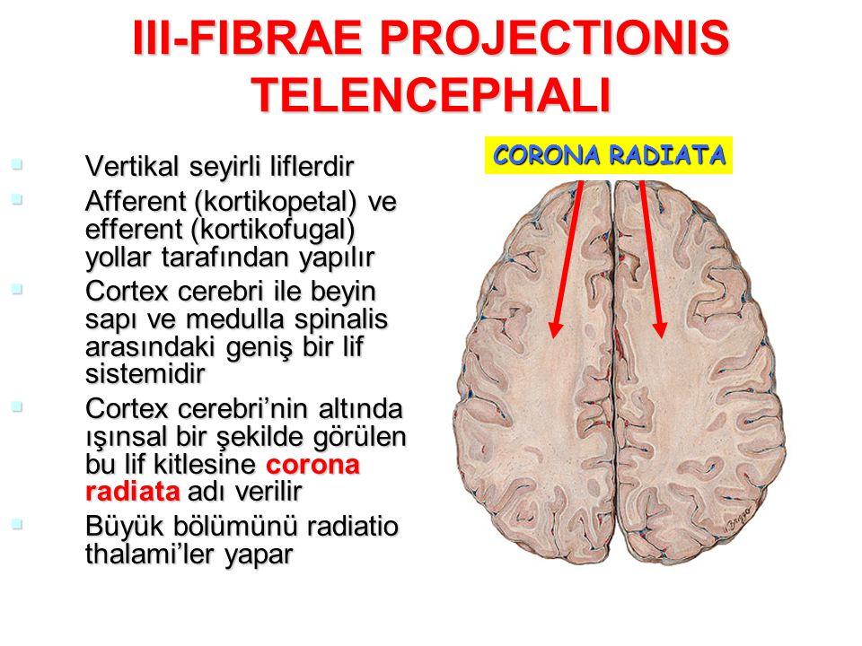 III-FIBRAE PROJECTIONIS TELENCEPHALI  Vertikal seyirli liflerdir  Afferent (kortikopetal) ve efferent (kortikofugal) yollar tarafından yapılır  Cortex cerebri ile beyin sapı ve medulla spinalis arasındaki geniş bir lif sistemidir  Cortex cerebri'nin altında ışınsal bir şekilde görülen bu lif kitlesine corona radiata adı verilir  Büyük bölümünü radiatio thalami'ler yapar CORONA RADIATA