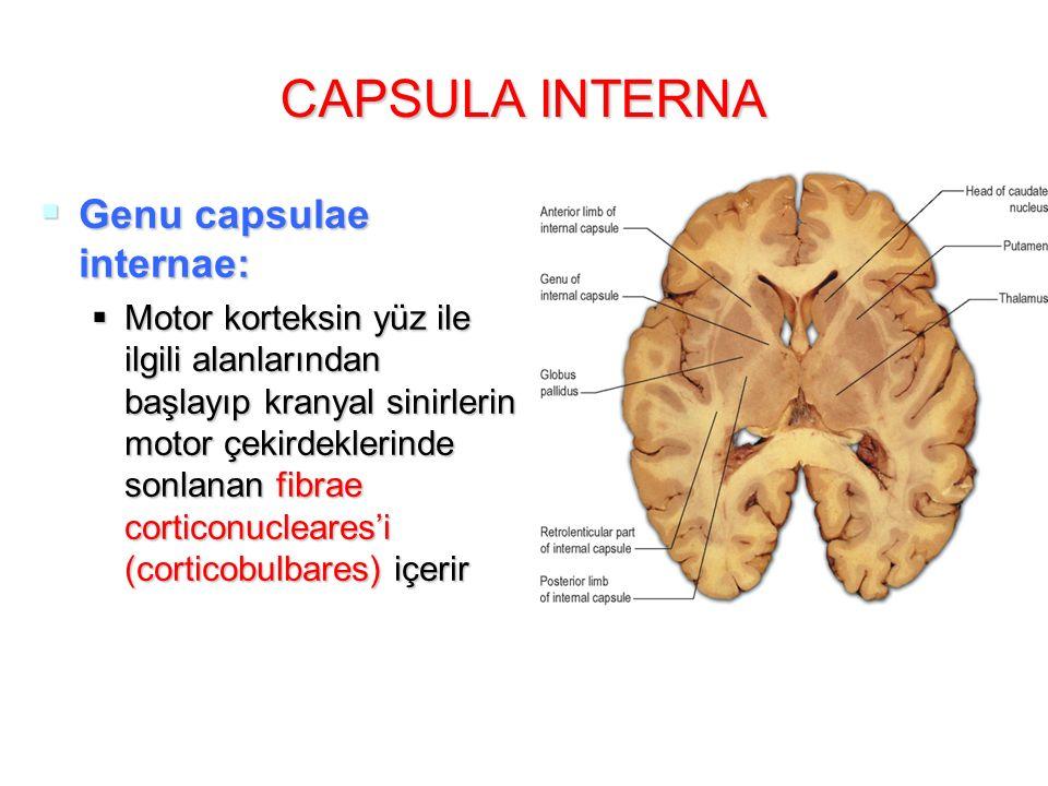 CAPSULA INTERNA  Genu capsulae internae:  Motor korteksin yüz ile ilgili alanlarından başlayıp kranyal sinirlerin motor çekirdeklerinde sonlanan fibrae corticonucleares'i (corticobulbares) içerir