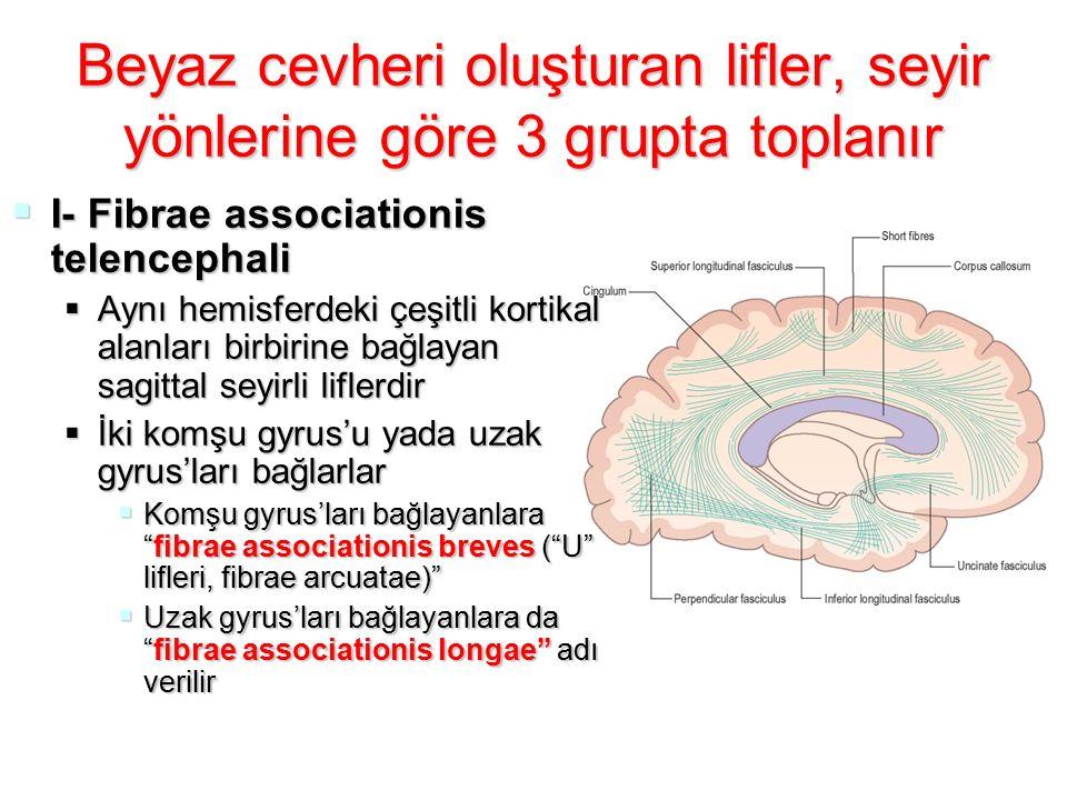FIBRAE ASSOCIATIONIS TELENCEPHALI  Fasciculus uncinatus:  Gyrus frontalis inferior'u polus temporalis'e bağlar  Fasciculus longitudinalis superior:  En uzun assosiasyon yoldur  Capsula interna'nın lateralindedir  Frontal lob bölümlerini, oksipital, parietal ve temporal loblara bağlar